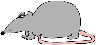 szczura różowy ogon royalty ilustracja