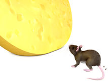 Mysz i chese Zdjęcie Stock