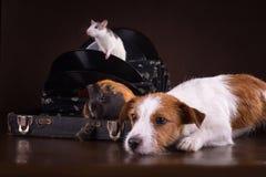 Szczury, króliki doświadczalni i pies Zdjęcie Royalty Free
