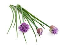 szczypiorków kwiaty Zdjęcia Stock