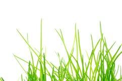 szczypiorków zieleni liść Obrazy Royalty Free