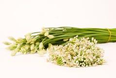 szczypiorku kwiat Obrazy Royalty Free