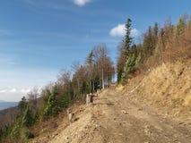 Szczyrk berg Klimczok Royaltyfri Fotografi
