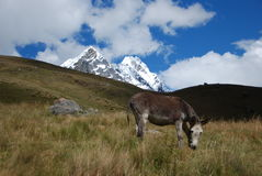 szczytów Peru śnieg Zdjęcia Stock