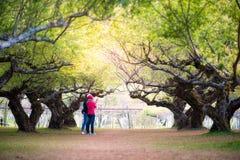 Szczyt Śliwkowi drzewa Obrazy Stock