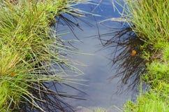 Szczytowy Gromadzki Dovestone rezerwuaru Greenfield, Anglia, UK zdjęcie stock