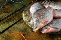 Sześć crucian karpia połowu prącia klatki pławików Fotografia Stock