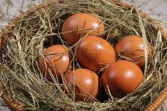Sześć jajek kłama na sianie w koszu zdjęcie stock