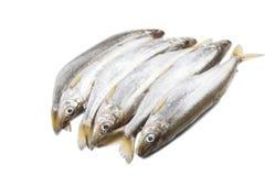 Sześć kawałków odosobniony deliciouse wytapiają ryby na białym tle obraz stock