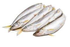 Sześć kawałków odosobniony deliciouse wytapiają ryby na białym tle zdjęcia royalty free