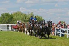 Sześć Końskiego pociągniecia drużyn Ciężcy szkiców konie obrazy stock