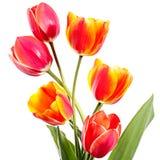 Sześć kwiatów Fotografia Royalty Free