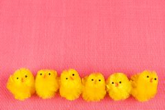 Sześć małych Easter kurczaków na rzędzie zdjęcie royalty free