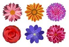 Sześć pięknych wielo- barwionych kwiatów Zdjęcie Royalty Free