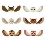Sześć sów twarzy z skrzydłami Ilustracji