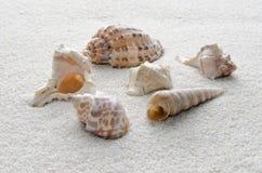 Sześć skorup w piasku Zdjęcie Stock