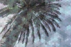 Sześciokąt abstrakcjonistyczna poligonalna tekstura nad obrazkiem palma Obraz Royalty Free