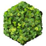 Sześciokąt robić od zieleń liści odizolowywających na białym tle 3 d czynią Zdjęcie Stock