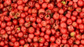 Szechuan pepper stock video