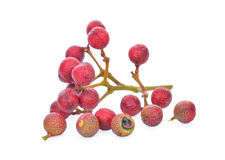 Szechuan pepper (Zanthoxylum piperitum), fruits isolated on whit royalty free stock photos