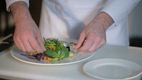 Szef kuchni dekoruje sałatki zbiory