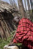 Szef w krall w Maasi wiosce, Ngorongoro Conservationa teren, Obraz Royalty Free