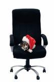 szefa krzesło Fotografia Royalty Free