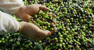 Szefa kuchni dotyka oliwki zbiory wideo