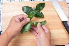 Szefa kuchni kłapcia kaffir wapna liście ręką Zdjęcia Royalty Free
