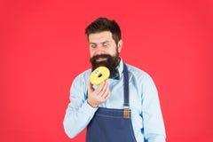 Szefa kuchni mężczyzna w kawiarni Karmowa kaloria Brodaty mężczyzna w fartuchu Pączka jedzenie Dieta i zdrowy jedzenie Piekarnian zdjęcie stock