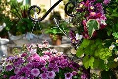 Szene der Blume des Blumenbeets stockfotos