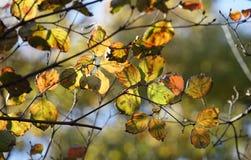Szene der Herbstnatur stockbild