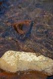 Szene des grünen Musterfrosches, der auf großem Flussstein unter klarem Süßwasserstromfluß stillstehen und des natürlichen Flussh Lizenzfreies Stockfoto