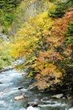 Szene des Herbstes Stockbilder