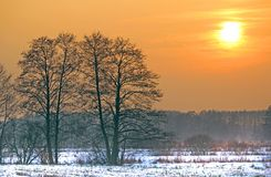 Szene eines schönen Sonnenuntergangs am Feld mit Bäumen Stockfoto