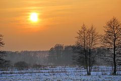 Szene eines schönen Sonnenuntergangs am Feld mit Bäumen Lizenzfreies Stockfoto