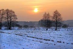 Szene eines schönen Sonnenuntergangs am Feld mit Bäumen Lizenzfreie Stockfotografie