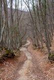 Bahn im Herbstwald Stockbild