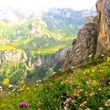 Szene von Blumen in den Schweizer Alpen lizenzfreies stockfoto