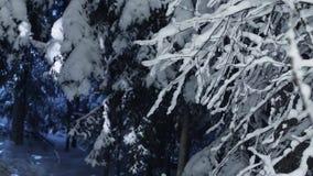 Szene von den dunklen Niederlassungen der Kiefers umfasst durch Schnee nachts kaltes Winter stock footage