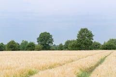 Szene von Traktorbahnen in der Plantage von Getreideanlagen gegen blauen Himmel stockbild