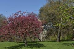 Szenen eines reizenden Frühlingstages Lizenzfreie Stockbilder