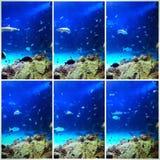 Szenen von einem Aquarium Lizenzfreie Stockfotografie