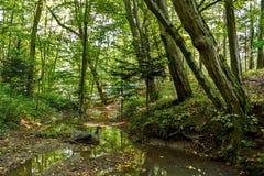Szenisch von den Sümpfen im Nationalpark Üppiger grüner Sumpf lizenzfreies stockbild
