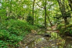 Szenisch von den Sümpfen im Nationalpark Üppiger grüner Sumpf stockfotos