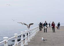 Szenische Ansicht über das Ufer beim Schwarzen Meer, Constanta stockfoto