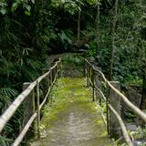 szenische Ansicht der Brücke und der verschiedenen Bäume mit grünem Laub, lizenzfreie stockbilder