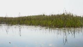 Szenische Ansicht der schönen Karstlandschaft, Sumpfgebiete stock video