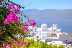 Szenische Ansicht des traditionellen griechischen cycladic Dorfs mit Blumen f lizenzfreies stockbild