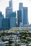 Szenische Ansicht von Blumen mögen Seerose und das Geschäftsgebiet, Singapur-Stadt Stockfotografie